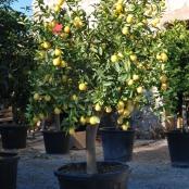 aguayjardin-arboles2