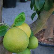 aguayjardin-arboles4